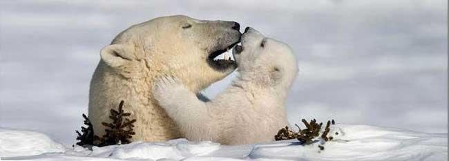 Tantra Intimiteit - Witte beren knuffel