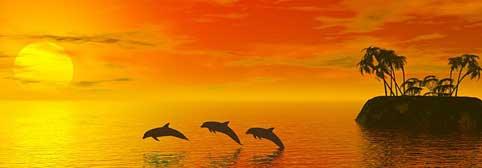 Tantrische Dolfijnen in rode zee
